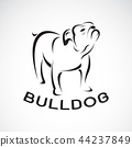 Vector of bull dog design on white background. Pet 44237849