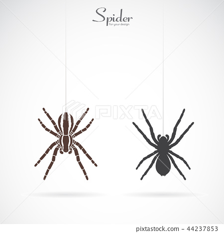 Vector of spider on white background. Insect.  44237853