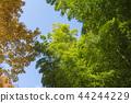 죽림, 대나무 숲, 대나무 44244229