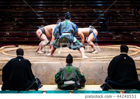 相撲摔跤 44248551
