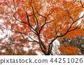 日本京都庭院,秋叶 44251026