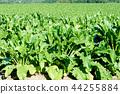 밭 농사 풍경 44255884