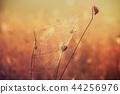 Autumn dry plant 44256976