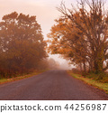 Road to the fog 44256987