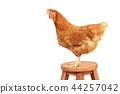 chicken standing on wood desk path 44257042