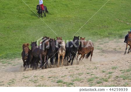 游牧民族駕駛放牧馬匹 44259939