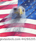 Double exposure  of  bald eagle on american flag. 44260205