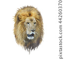 Lion head watercolor 44260370
