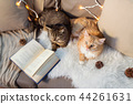 two cats lying on sofa with book at home 44261631