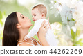 mother kissing baby over cherry blossom background 44262269