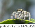 跳蛛 蜘蛛 自然 44266459