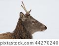 Deer in the snow. Deer in winter. 44270240