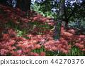 花朵 花卉 花 44270376