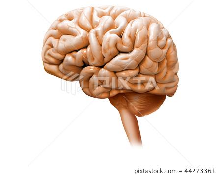 大腦 頭腦 數碼成像圖片 44273361