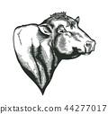 bull, farm, animal 44277017