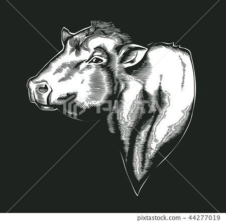 Head of bull of dangus breed drawn in vintage woodcut style. Farm animal isolated on white 44277019