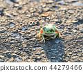 青蛙 樹蛙 日本樹蛙 44279466