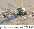 青蛙 樹蛙 日本樹蛙 44279469