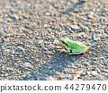 青蛙 樹蛙 日本樹蛙 44279470
