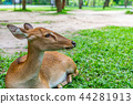 Close up young deer resting on grass in a park 44281913
