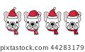 개, 강아지, 프렌치 44283179