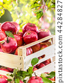 Fresh red apples in wooden crate on garden table. 44284827
