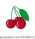 cherry vector fruit 44286413
