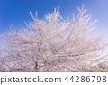매화, 가지, 나뭇가지 44286798