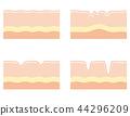 人體皮膚 皮膚 皺褶 44296209