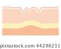 人體皮膚 皮膚 皺褶 44296231
