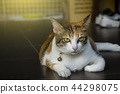 thai cat cute on home blured background 44298075