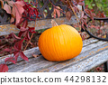 Pumpkin as a symbol of autumn. 44298132