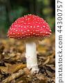 Mushroom 44300757