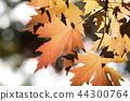 Autumn leaves 44300764