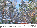 Trees in winter park. 44300951