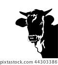 silhouette of fierce bull black and white. Bull  44303386