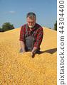 农民 农夫 玉米 44304400