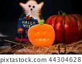 万圣节 糖霜 饼干 派对 捣蛋 恶作剧 ハロウィンのクッキー halloween cookies 44304628