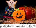 万圣节 糖霜 饼干 派对 捣蛋 恶作剧 ハロウィンのクッキー halloween cookies 44304679
