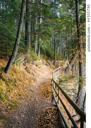 walkway around lake of Synevyr National park 44305790
