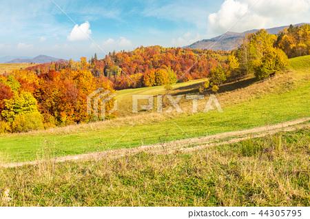 lovely autumn scenery of Carpathian mountains 44305795
