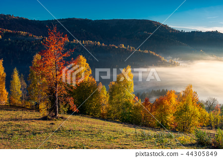 gorgeous morning light and fog in autumn 44305849