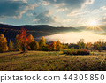 forest, hill, countryside 44305850