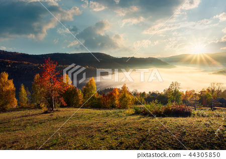 valley full of fog in mountainous countryside 44305850