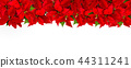 Christmas red flower poinsettia border white backg 44311241