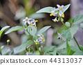 꽃, 플라워, 식물 44313037