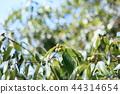 도토리, 열매, 과실 44314654