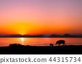 ความเป็นพ่อแม่,ทะเลสาบ,พระอาทิตย์ตก 44315734