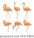 Flamingo Animal Bird Cartoon Character Vector 44315869