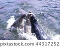 물범, 바다표범, 수조 44317252